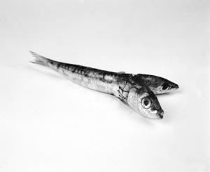 Emiliano Zanichelli, Sofisticazioni Alimentari, 2012, stampa fotografica su carta cotone 1/5, 20 x 25