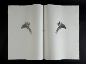 Omar Galliani, Un iris per Giorgio, matita nera su carta + anello d'oro, 78,5x107 cm