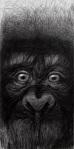 silvano-scolari-scimmia-concatenata-grafite-su-carta